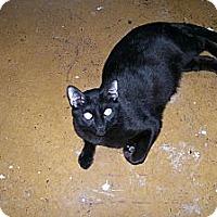 Adopt A Pet :: Panther - Scottsdale, AZ