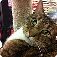 Adopt A Pet :: Marley - Warminster, PA