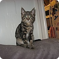 Adopt A Pet :: Peanut & Rocky - Portland, ME