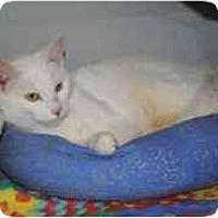Adopt A Pet :: Cielo - Marietta, GA