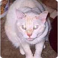 Adopt A Pet :: Jocque - Clementon, NJ