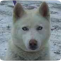 Adopt A Pet :: Sugar Needs Help! - Belleville, MI