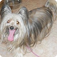 Adopt A Pet :: Gizzy - dewey, AZ