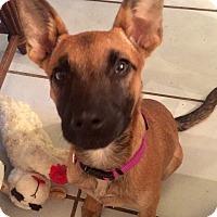 Adopt A Pet :: MINKA - EDEN PRAIRIE, MN