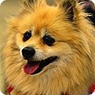 Adopt A Pet :: Jinny