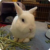 Adopt A Pet :: Frankie Blue Eyes - Williston, FL