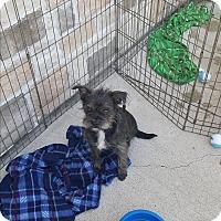 Adopt A Pet :: Mamas - Brownsville, TX