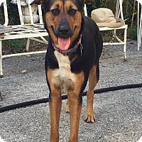 Adopt A Pet :: Nana - Ocean Ridge, FL
