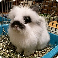 Adopt A Pet :: Escobar - Miami, FL
