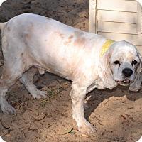 Adopt A Pet :: Vinny - Melrose, FL