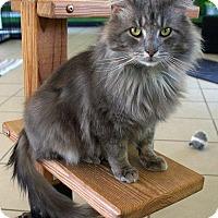Adopt A Pet :: Smokey - Maynardville, TN