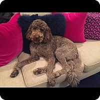 Adopt A Pet :: Coco - Alpharetta, GA