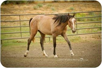 Appendix/Quarterhorse Mix for adoption in Durango, Colorado - Eve