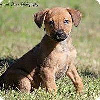 Adopt A Pet :: Gia - Bradenton, FL