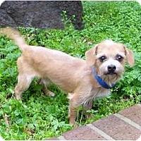 Adopt A Pet :: Tom - Mocksville, NC
