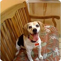 Adopt A Pet :: Sophie - Indianapolis, IN