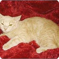 Adopt A Pet :: Christine - Colmar, PA