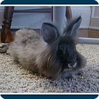 Adopt A Pet :: LeBun - Williston, FL
