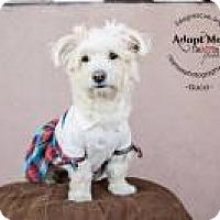 Adopt A Pet :: Gucci - Shawnee Mission, KS