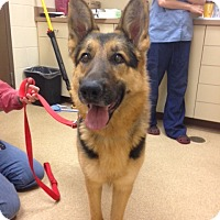 Adopt A Pet :: Max*Adoption Pending* - Mill Creek, WA