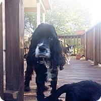 Adopt A Pet :: Truman - San Antonio, TX