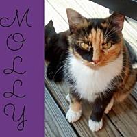 Adopt A Pet :: Molly - Lansdowne, PA