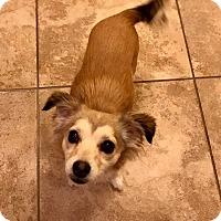 Adopt A Pet :: Pearl - Las Vegas, NV