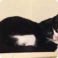 Adopt A Pet :: Babbitt - Colorado Springs, CO