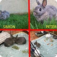 Adopt A Pet :: Peter - West Palm Beach, FL