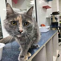 Adopt A Pet :: BEATTY - Canfield, OH