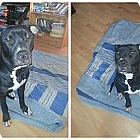 Adopt A Pet :: Tammy - Montreal, QC