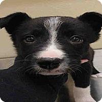 Adopt A Pet :: Rob - Ogden, UT