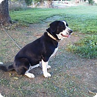 Adopt A Pet :: Lola - Stamford, CT