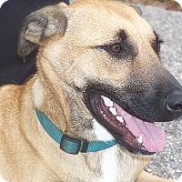 Adopt A Pet :: BEAR - Odessa, FL