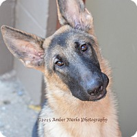 Adopt A Pet :: Liesel - Indianapolis, IN