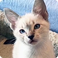 Adopt A Pet :: Anna - Irvine, CA