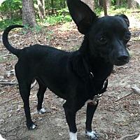 Adopt A Pet :: Peabody - Brattleboro, VT