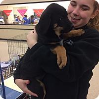 Adopt A Pet :: Hammer - Hohenwald, TN