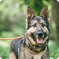 Adopt A Pet :: Balto - Monterey, CA
