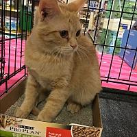 Adopt A Pet :: Rosalie - Pittstown, NJ