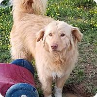 Adopt A Pet :: Maverick in Ct - Manchester, CT