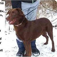 Adopt A Pet :: # 622-10 @ Animal Shelter - Zanesville, OH