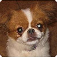 Adopt A Pet :: Juliette-NJ - Mays Landing, NJ