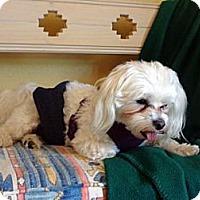 Adopt A Pet :: Rascal - Denver, CO