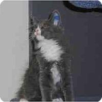 Adopt A Pet :: Einstein - Milwaukee, WI