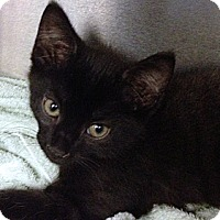 Adopt A Pet :: Johnny - Troy, OH