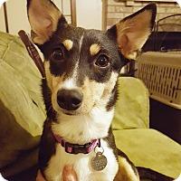 Adopt A Pet :: Aggie - Marietta, GA