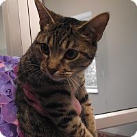Adopt A Pet :: Martin - Chambersburg, PA