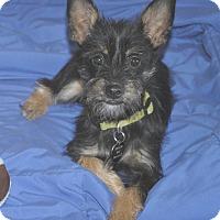 Adopt A Pet :: Nugget - San Francisco, CA