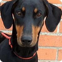 Adopt A Pet :: LANA (video) - Los Angeles, CA